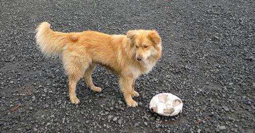 The playful dog
