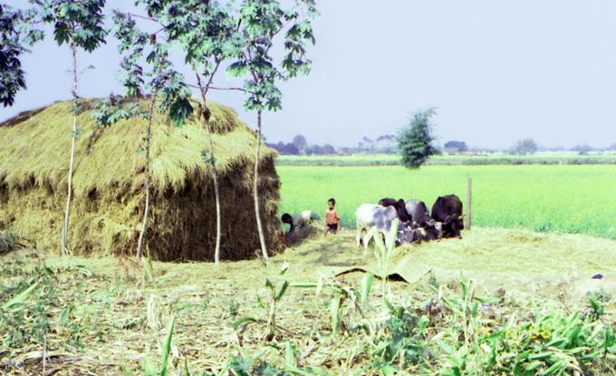 familia trabalha no campo