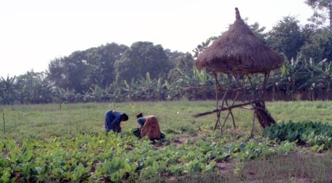 site_nepal_reserva_agricultura