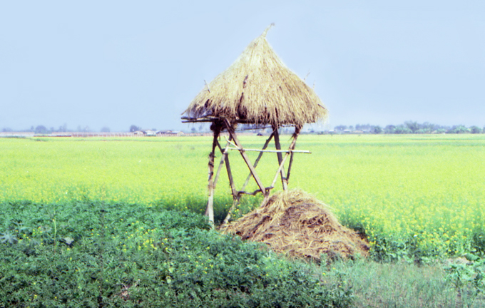 campo agrícola em Chitwan