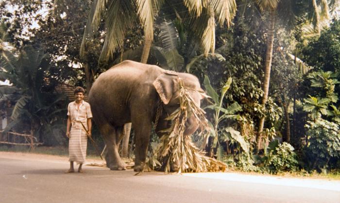 Sri Lanka - na estrada
