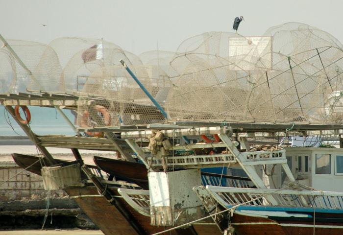 site_barco_passaro