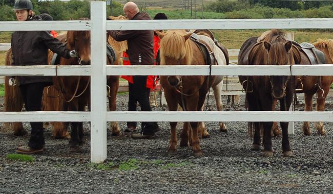 Laxnes horses farm