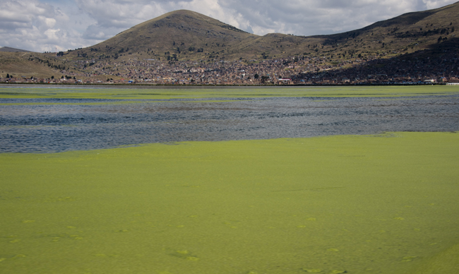 algas no Titicaca