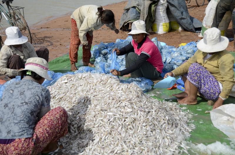 pescado no Tonle Sap