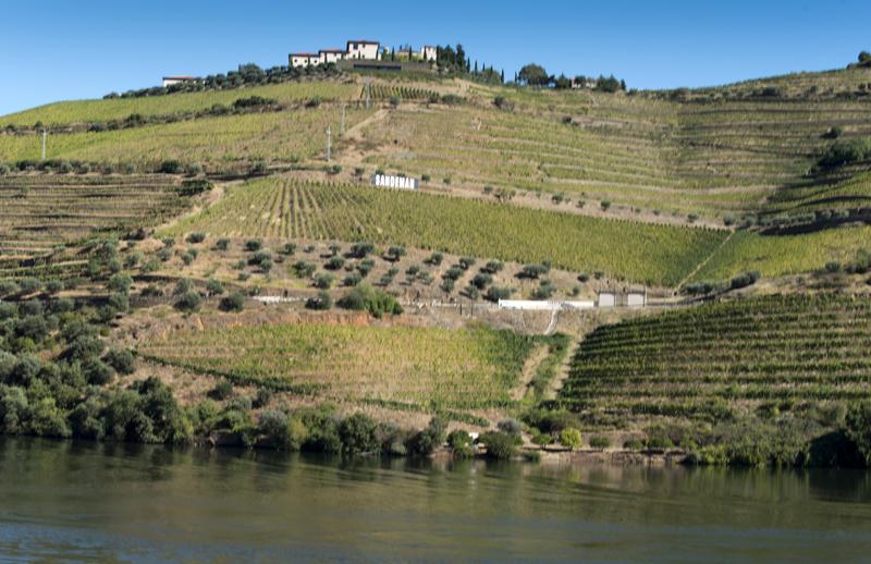 socalcos das vinhas do Douro
