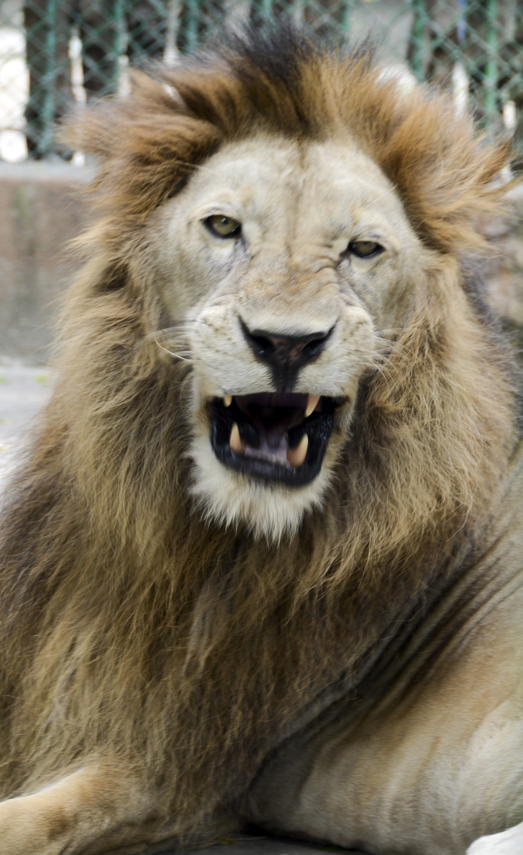 zoo de Saigão