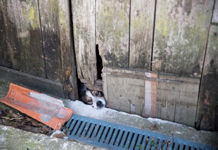 Cão tenta ver as visitas