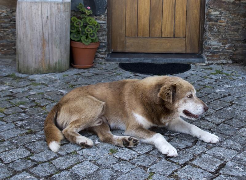 Cães que gostam muito dos visitantes