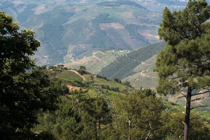 As encostas do Douro