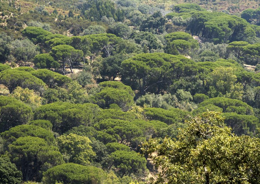 A Tapada tem zonas com muitos pinheiros