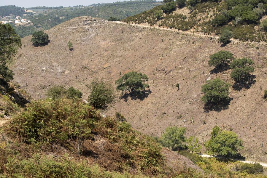 Limpeza de grandes áreas da mata para prevenir incêndios