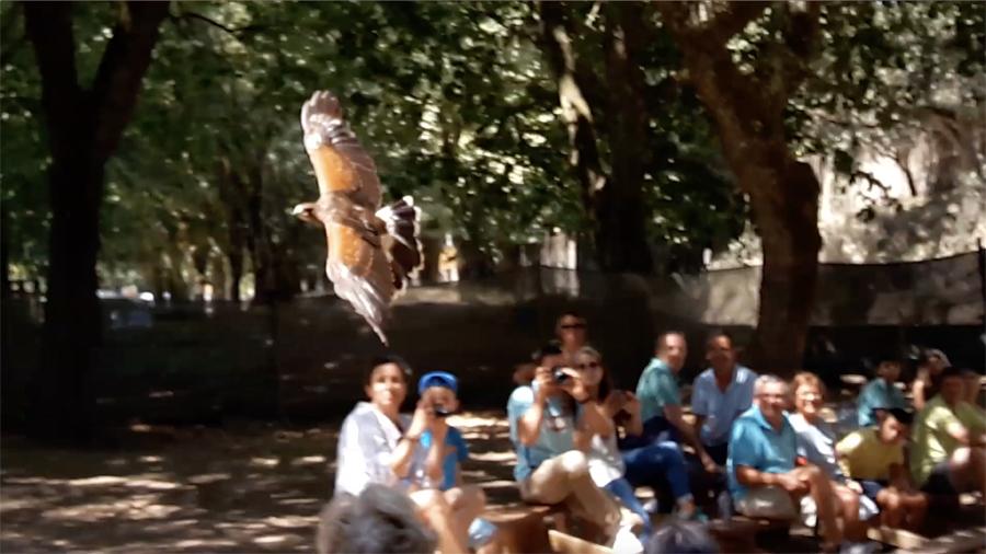 Voo livre de uma águia na Tapada de Mafra