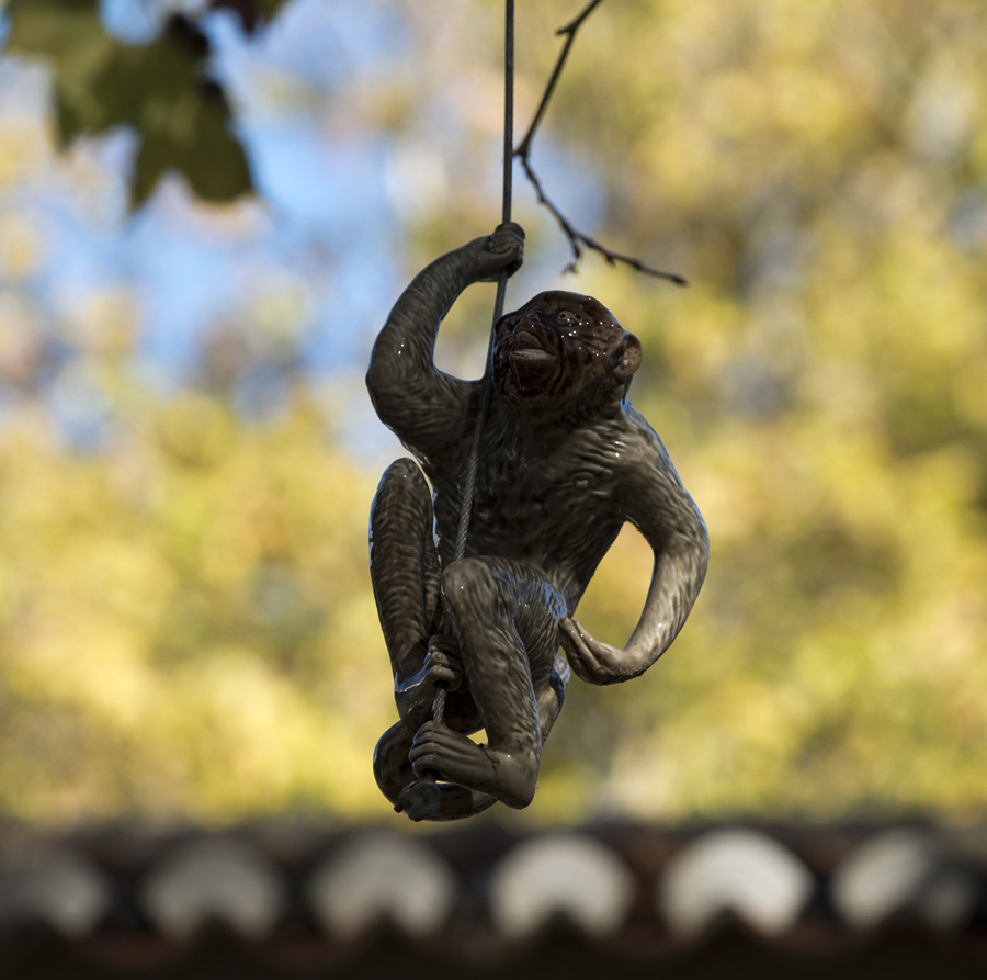 Macaco no parque D. Carlos I