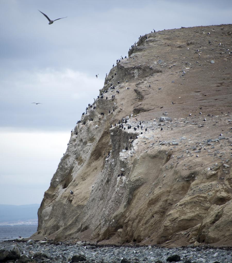 Gaivotas e corvos de água na ravina