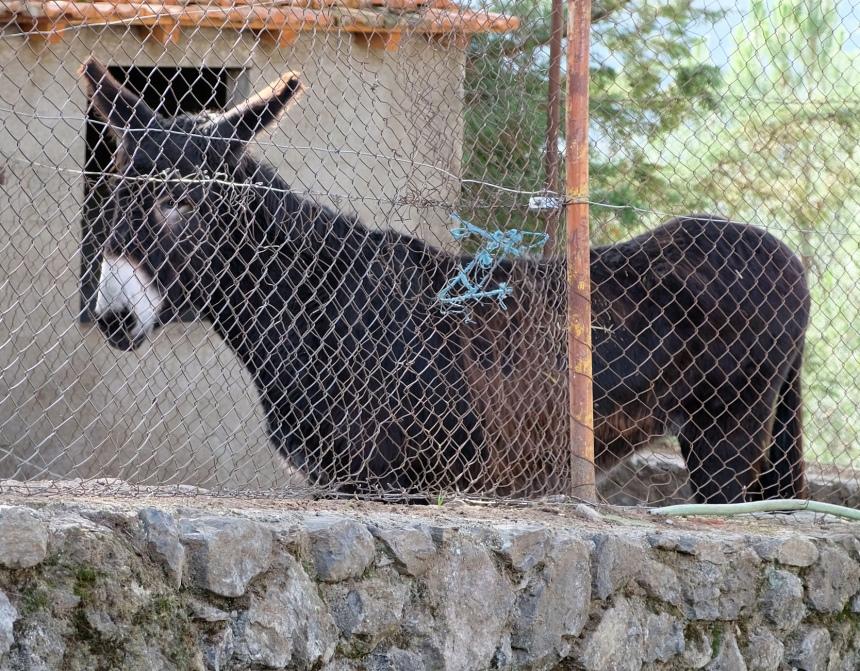 Tratar dos animais é uma experiência possível