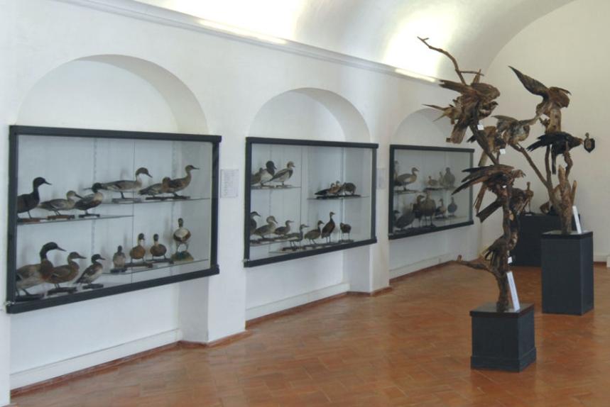 Castelo, exposição sobre caça - © J.Real Andrade/MBCB, Arquivo Fotográfico