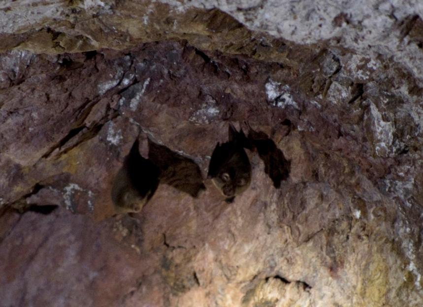 Colónia de morcegos