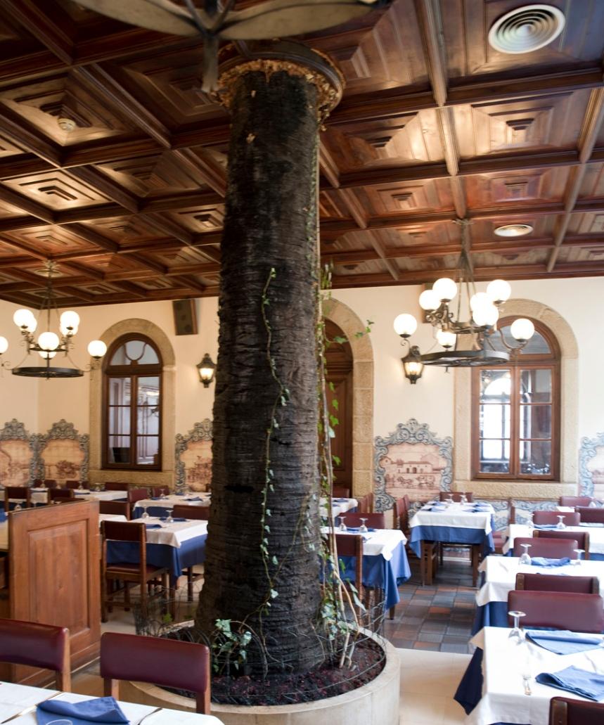 Palmeira antiga que está no interior de uma das salas