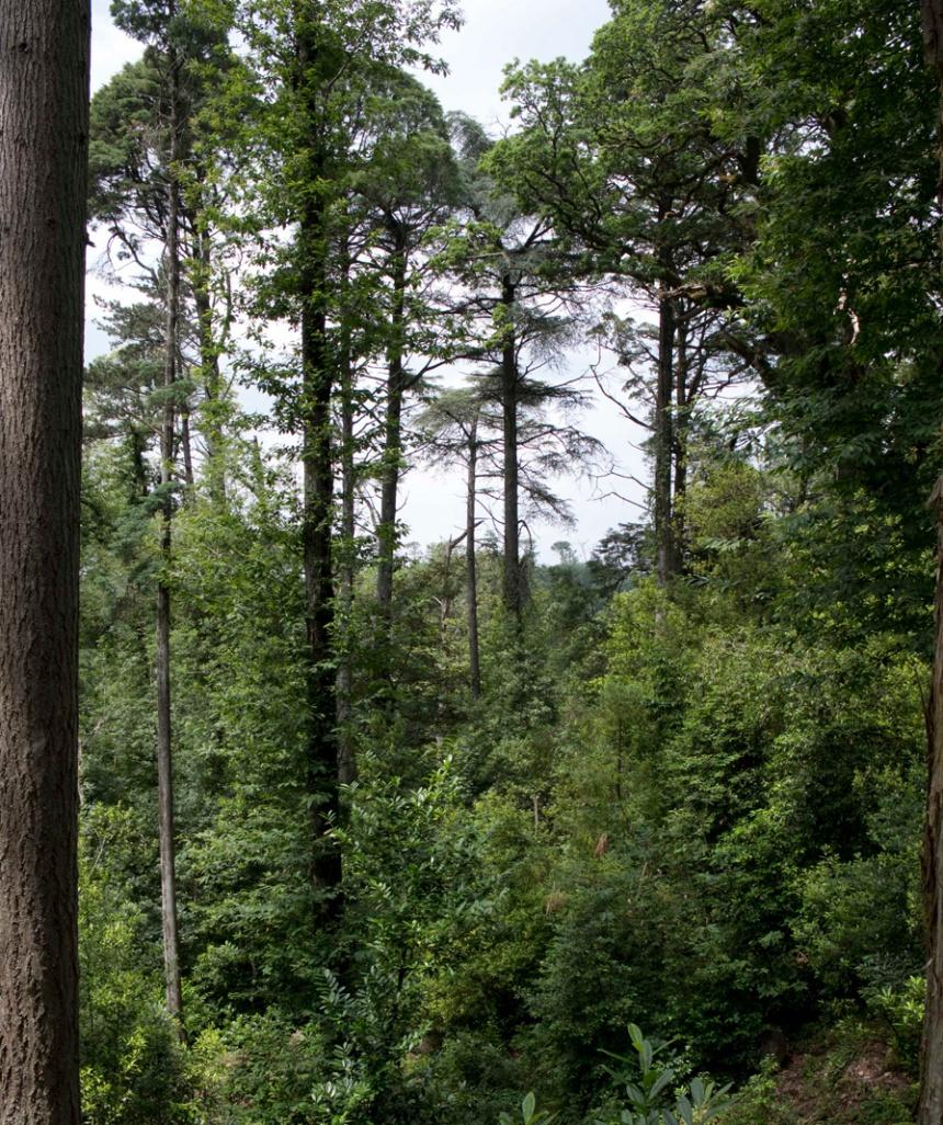 Preferiam as árvores muito altas e reflorestaram a mata
