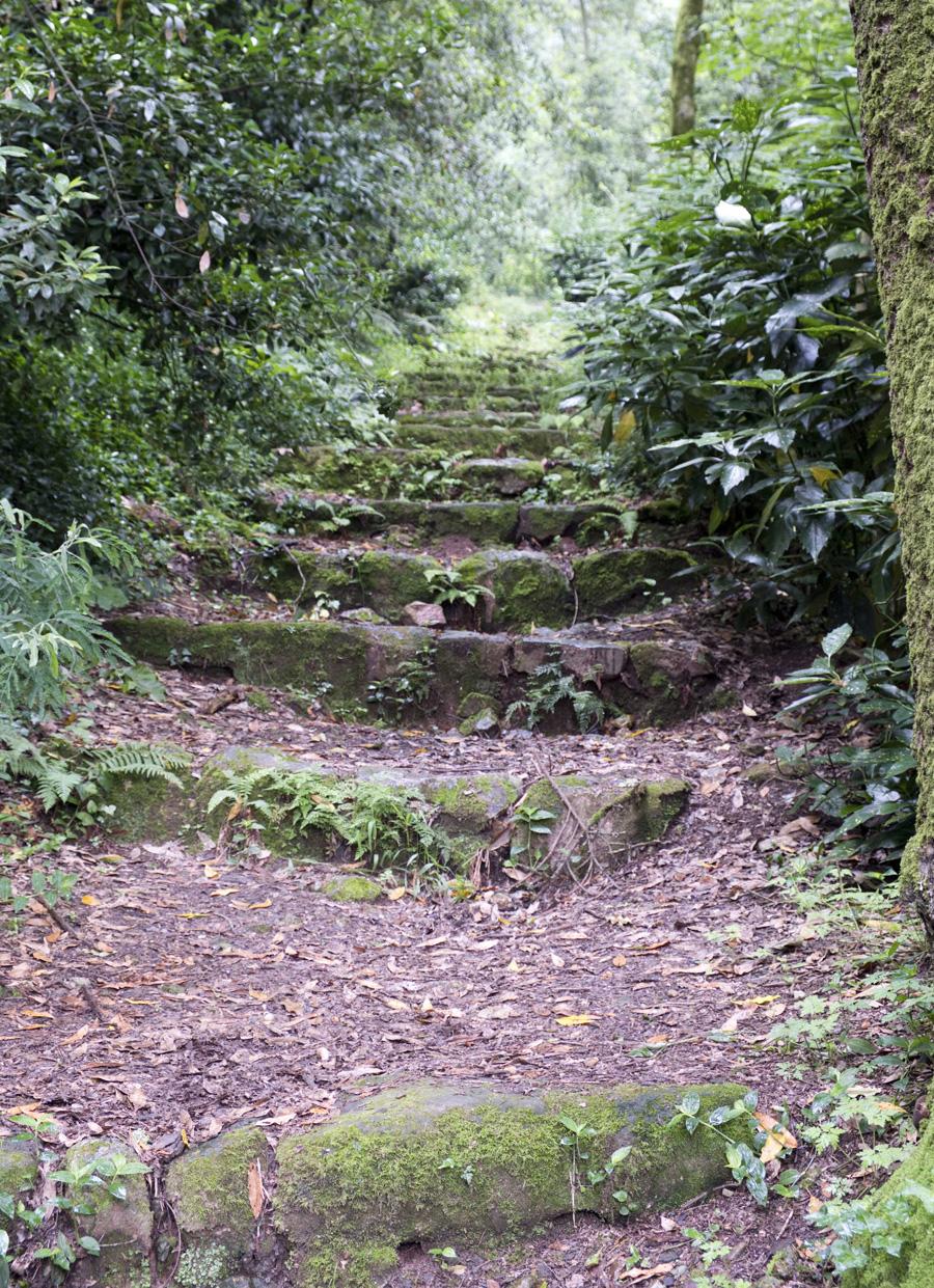 """Os caminhos do """"silêncio da Natureza"""""""
