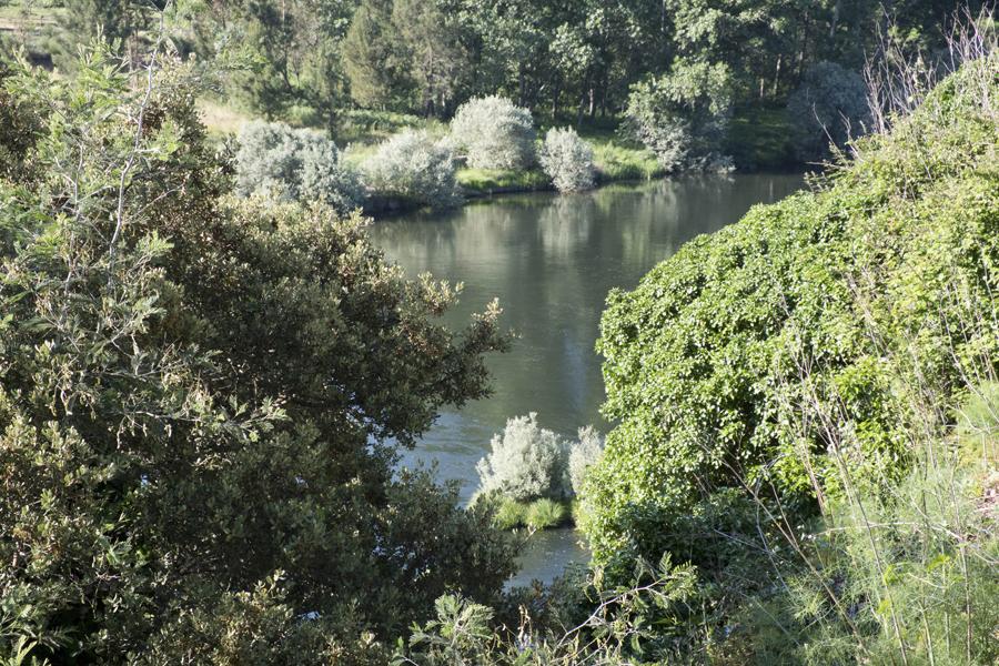 O Zêzere a contornar Janeiro de Baixo