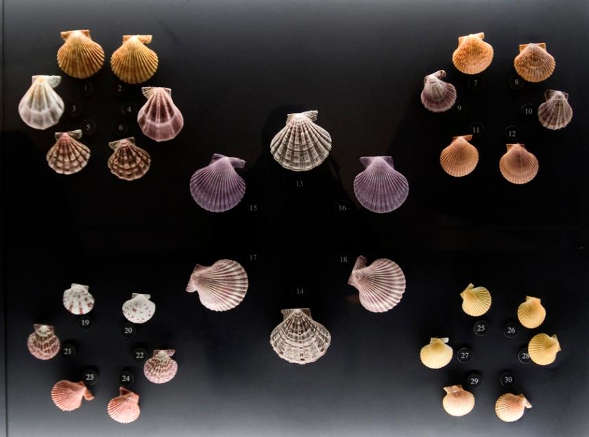 Conchas em exposição
