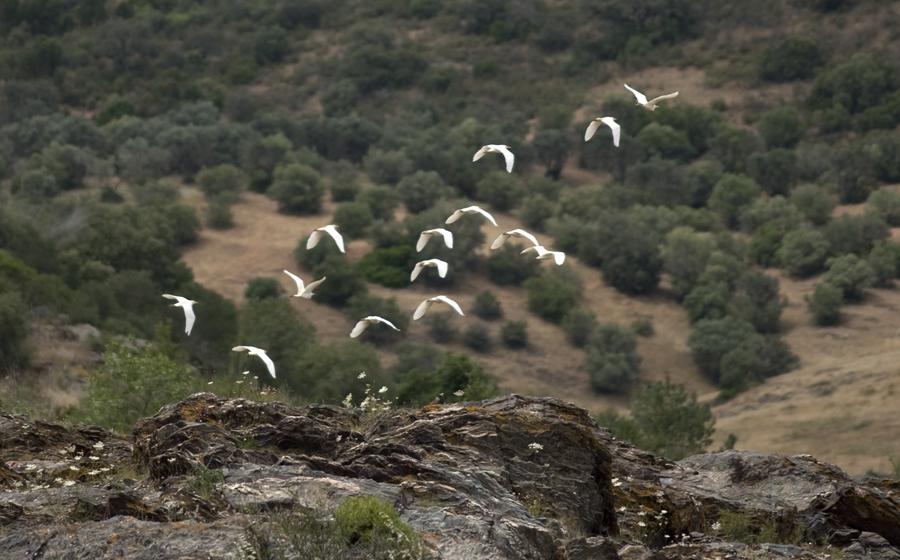 Aves junto às cataratas