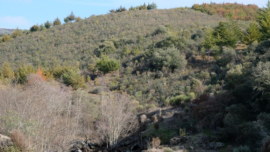 Monte de Morais