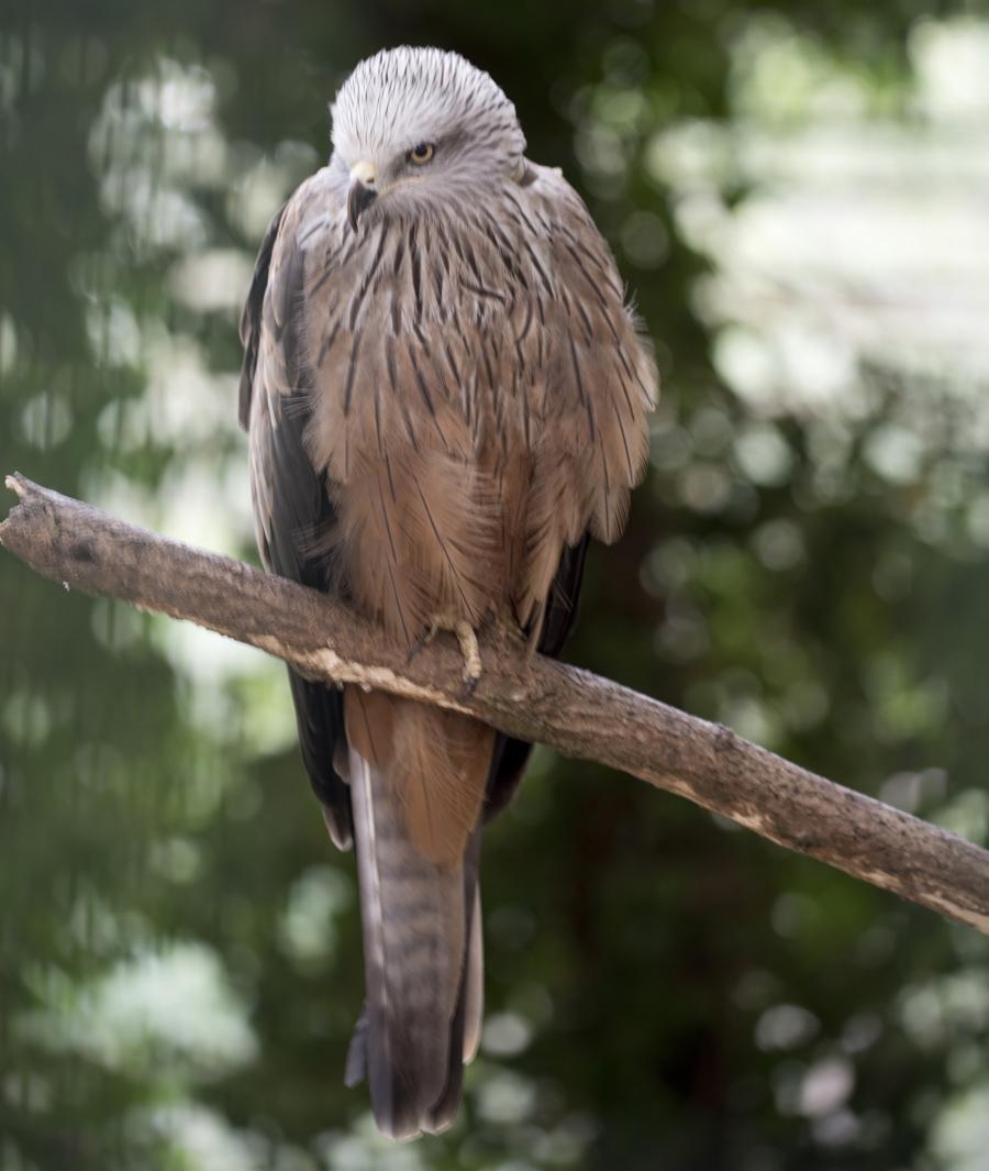 Aves que não podem voltar ao seu habitat natural