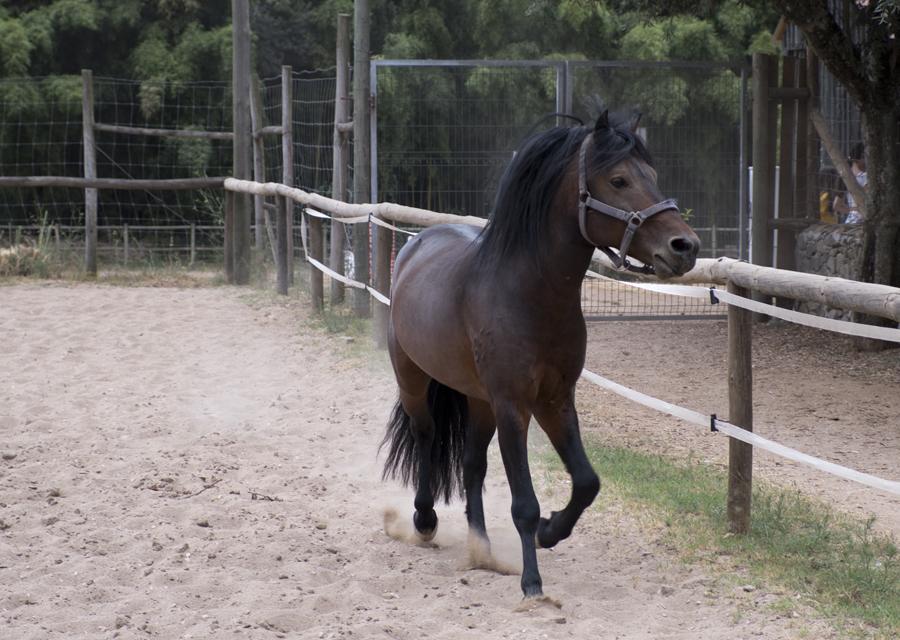 Cavalo no picadeiro
