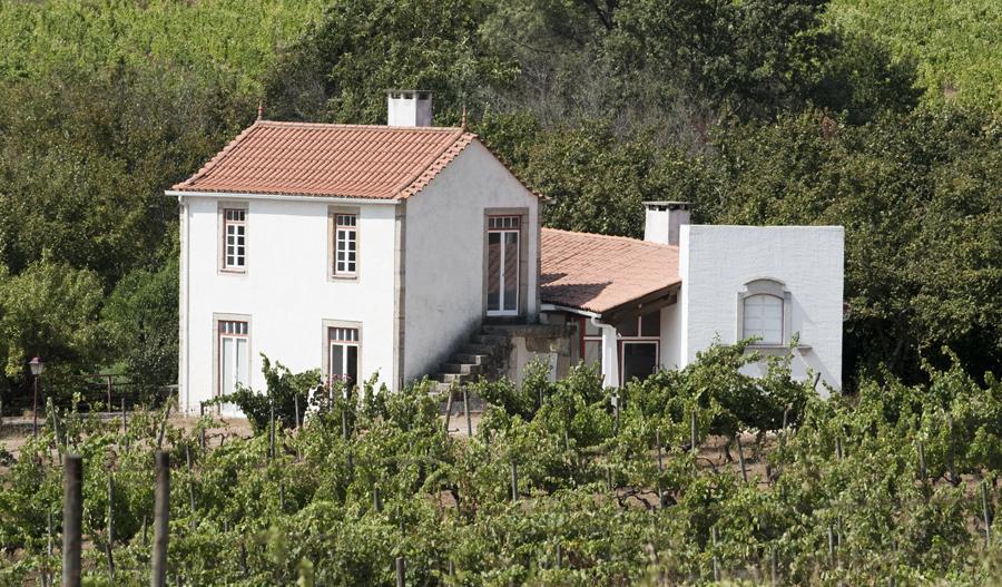 Uma das vinhas e a casa onse se fazem as provas