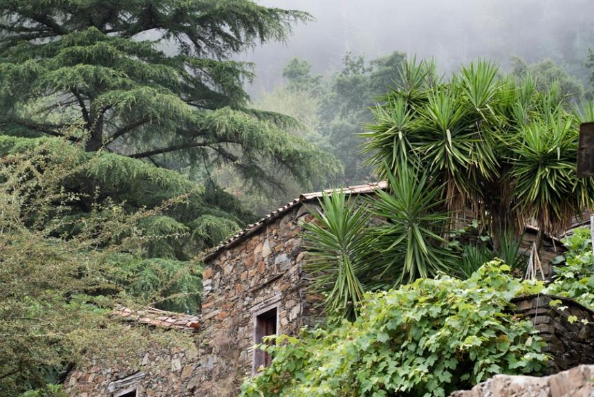 A aldeia está envolvida por vegetação luxuriante