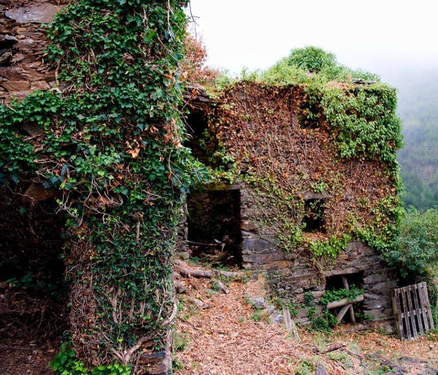 A vegetação densa cobre algumas casas
