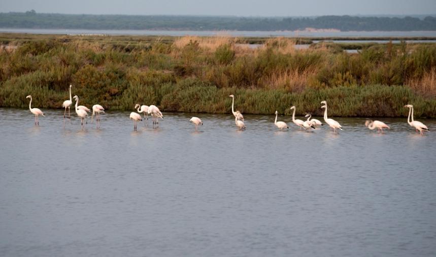 Flamingos numa antiga salina
