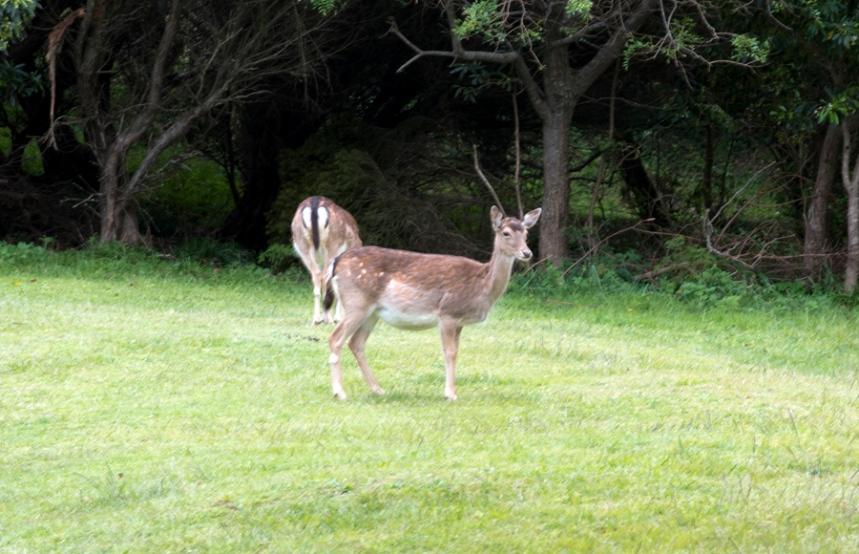 O parque tem alguns animais selvagens que partilham caminhos com os visitantes