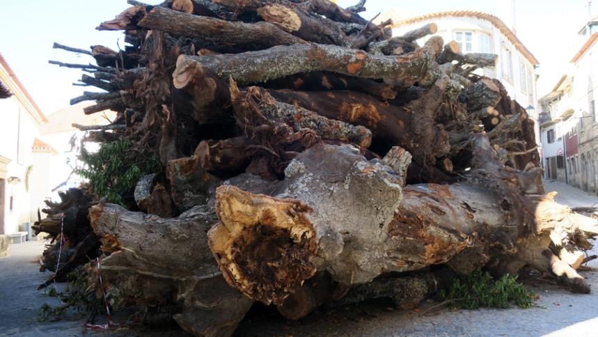 São várias árvores empilhadas na praça da igreja