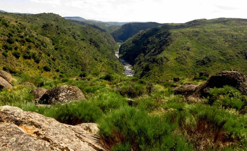O rio Côa na Faia Brava ©ATN