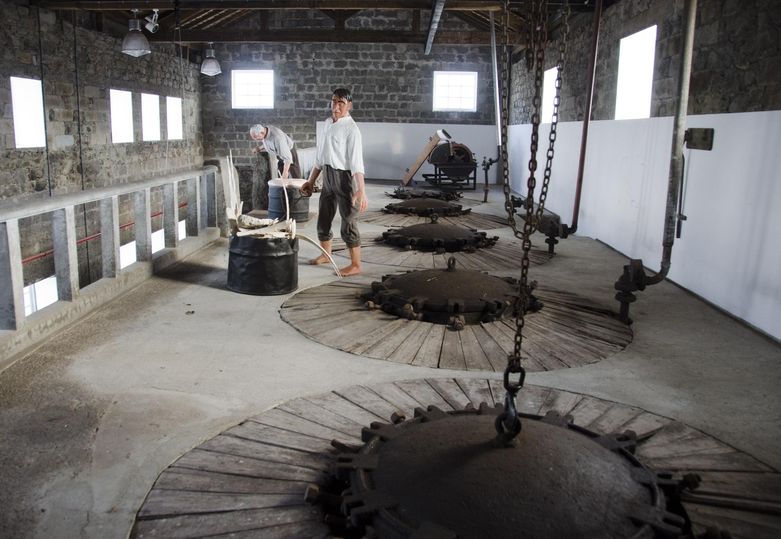 Museu da Fábrica da Baleia do Boqueirão