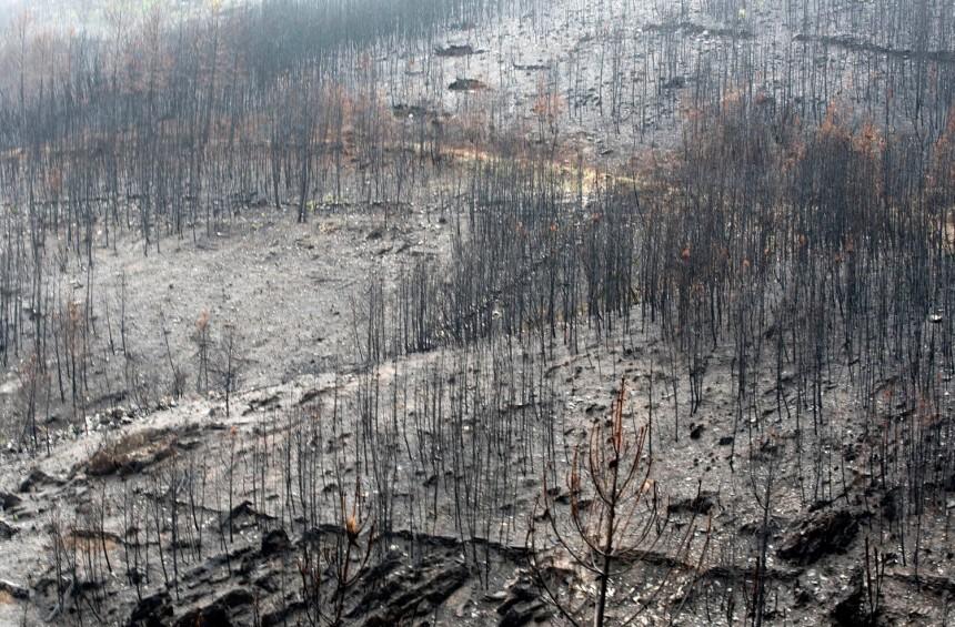 Pinheiros ardidos na área envolvente de Fontão