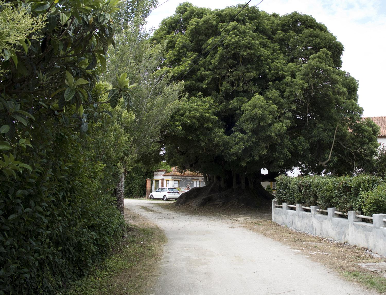 site_vista_alegre_bairro_DSCF2802