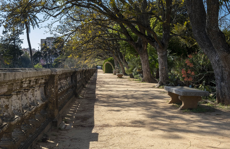 Alameda de Jacarandás
