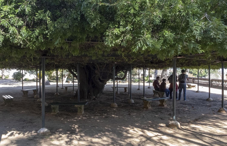 site_botanico_ajuda_DSCF9709