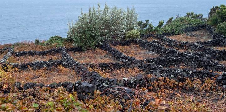 A vinha está clasificada pela Unesco como Património Mundial