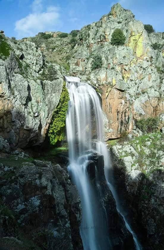 Faia da Água Alta ©Maschocalheiro Bemposta