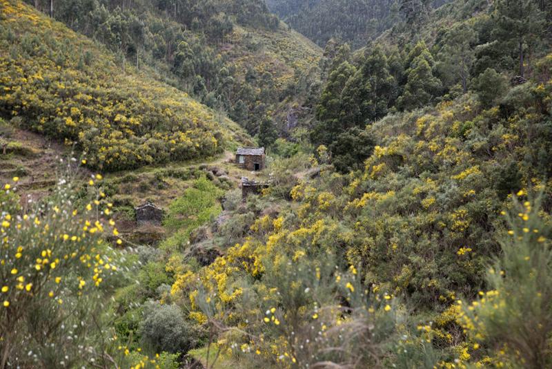 Serra do Açor entre Foz d'Égua e Piodão