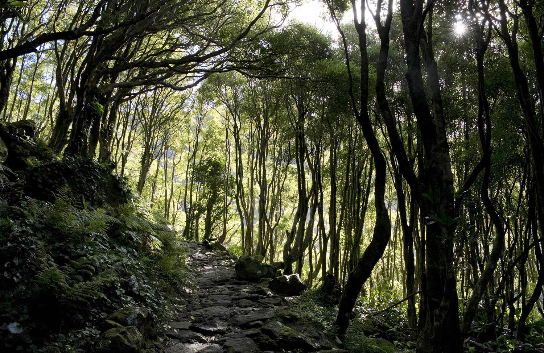 Caminho de acesso à cascata
