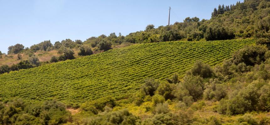 A paisagem de terrenos agrícolas é uma dominante na viagem