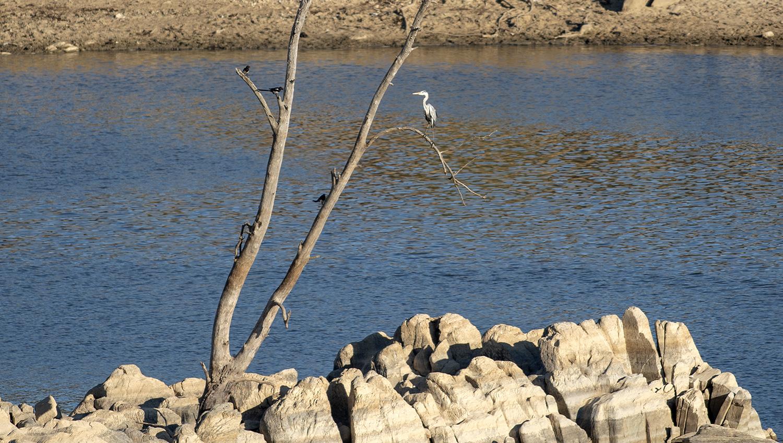 Ao final do dia são visveis várias aves e o local é também escolhido para passeios pedestres