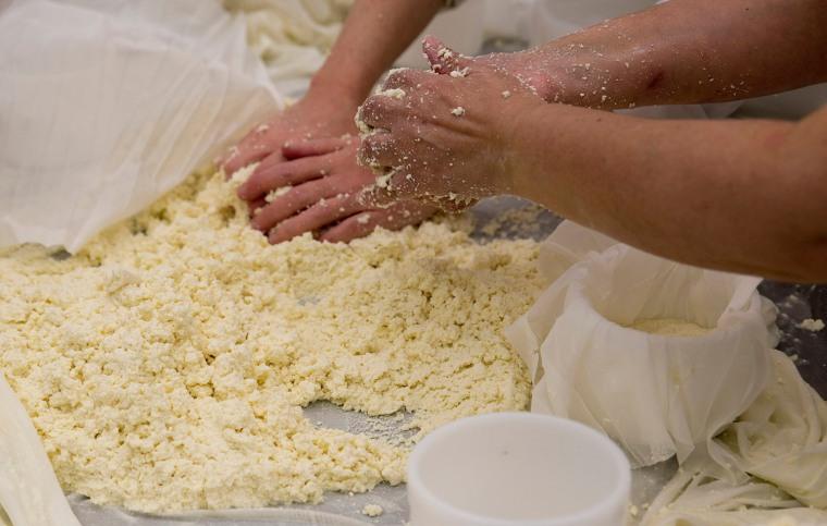 Coalhada resultante de leite cru, sal e flor de cardo